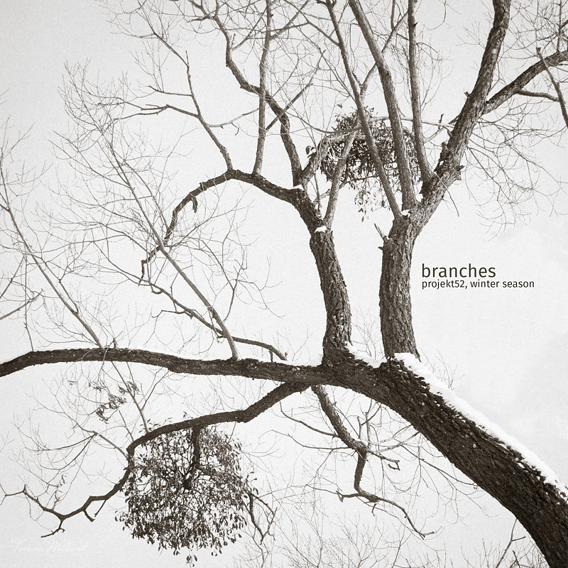 04/52 - branches, winter season